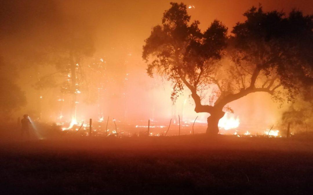 Incendio en el pinar del camino de acceso al Espadañal.